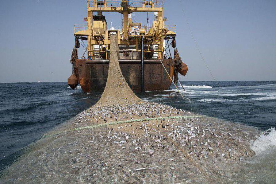 خبرنگاران صید میگو، چالش ویرانگر توازن زیستی آبزیان خلیج فارس